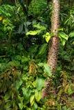 La forêt tropicale tropicale Images libres de droits