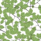 La forêt tropicale verte d'été laisse à humeur lumineuse le modèle sans couture pour le tissu de fashoin, livre de papier peint,  Images stock