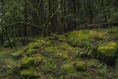 La forêt verte à Mexico images libres de droits