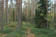 La forêt verte au milieu de Finladn images stock
