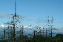 La foresta è morto fotografia stock libera da diritti