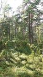 La foresta è realmente bella qui in Finlandia Immagini Stock