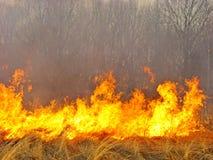 La foresta è su fuoco fotografia stock