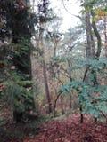 La foresta immagine stock libera da diritti
