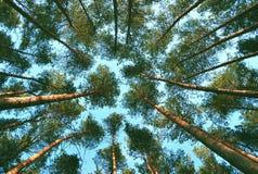 La foresta Fotografia Stock