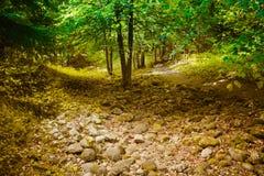 La foresta Immagine Stock