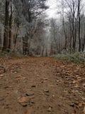 La foresta Fotografie Stock Libere da Diritti