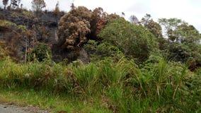 La foresta Immagini Stock