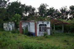 La foresta abitata in casa abbandonata accade l'opacità placentare fotografia stock libera da diritti