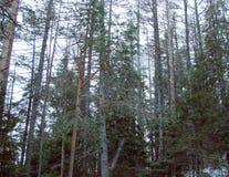 La foresta al piede della catena montuosa di alto Tatras slovakia Fotografia Stock