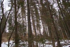 La foresta al piede della catena montuosa di alto Tatras slovakia Immagine Stock