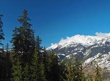 La foresta attillata dell'albero e la montagna francese dei alpes della Savoia completano in soleggiato Fotografia Stock