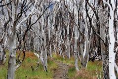 La foresta bruciata si è carbonizzata dagli alberi spettrali - Torres del Paine - Patagonia cilena Fotografia Stock