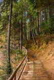 La foresta cammina in autunno Immagini Stock Libere da Diritti