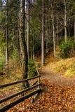 La foresta cammina in autunno Immagine Stock