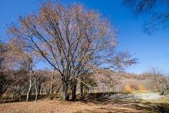 La foresta con il fogliame di caduta in autunno tardo immagini stock libere da diritti