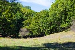 La foresta decidua si sviluppa su terreno ruvido Fotografia Stock