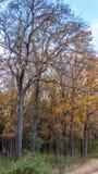 La foresta degli alberi con la caduta vibrante ha colorato le foglie fotografia stock