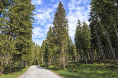 La foresta del parco nazionale di Triglav dentro la valle di Bohinj vicino ha sanguinato in Julian Alps, Slovenia, Europa Immagine Stock
