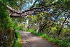 La foresta dell'alloro, i fontes di Lewada il das 25 e Lewada fanno Risco, l'isola del Madera, Portogallo Immagine Stock