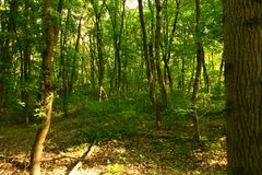 La foresta dell'estate, la foresta selvaggia del sunsummer, il sole è bella, la sua bellezza indimenticabile immagini stock libere da diritti