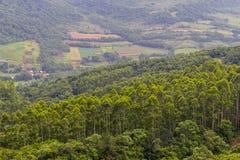 La foresta dell'eucalyptus in Morro fa la vegetazione della montagna del gaucho immagine stock