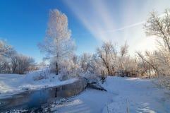 La foresta dell'inverno di Snowy con i cespugli e gli alberi sulla corrente contano, la Russia, i Urals Immagine Stock Libera da Diritti