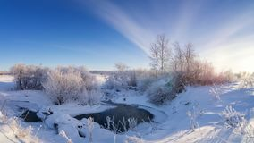 La foresta dell'inverno di Snowy con i cespugli e gli alberi sulla corrente contano, la Russia, i Urals Fotografia Stock