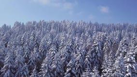La foresta dell'inverno in tempo soleggiato, fiocchi di neve cade Siluetta dell'uomo Cowering di affari archivi video