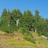 Foresta e prato della montagna Immagine Stock