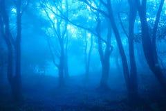 La foresta della foschia Fotografie Stock