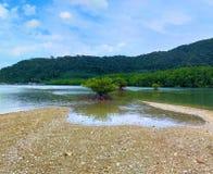 La foresta della mangrovia ha belle spiagge thailand immagine stock