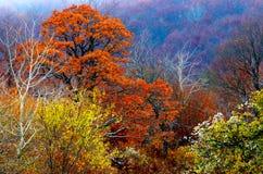 La foresta di autunno colora 1 Immagine Stock Libera da Diritti