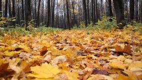 La foresta di autunno con giallo e rosso va su erba Movimento lento video d archivio