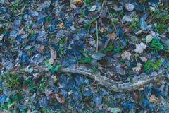 La foresta di autunno lascia la neve di verde blu congelata fotografie stock