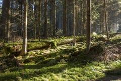 La foresta di autunno in montagna di Sumava Fotografie Stock