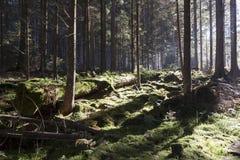 La foresta di autunno in montagna di Sumava Immagini Stock Libere da Diritti