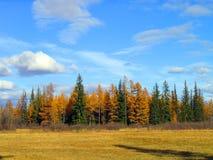 La foresta di autunno in Yakutia Fotografie Stock Libere da Diritti