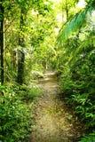 La foresta di camminata di pensiero della pista immagini stock