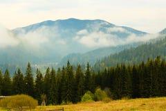 La foresta di conifere è verde, gli alberi alti e montagne immagini stock