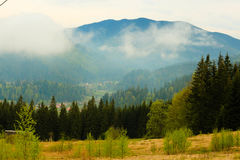 La foresta di conifere è verde, gli alberi alti e montagne fotografia stock libera da diritti