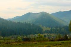 La foresta di conifere è verde, gli alberi alti e montagne Fotografia Stock