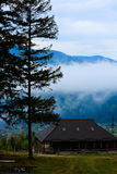 La foresta di conifere è verde, gli alberi alti e montagne Immagine Stock Libera da Diritti