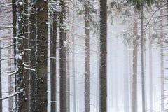 La foresta di conifere in montagne immagini stock