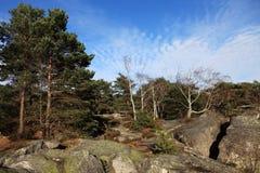 La foresta di Fontainebleau Fotografie Stock Libere da Diritti