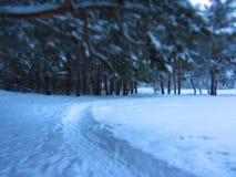 La foresta di inverno immagine stock libera da diritti
