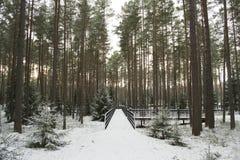 La foresta di Katyn Fotografie Stock