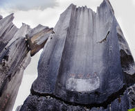 La foresta di pietra Immagine Stock