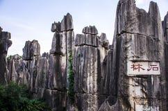 La foresta di pietra Fotografia Stock