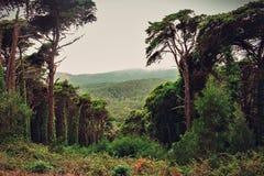 La foresta di Sintra fotografia stock libera da diritti
